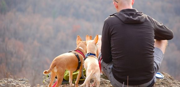 Traveling with Pets: Things You Need to Consider