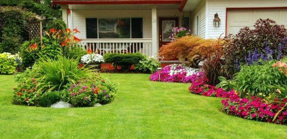 How to Maintain your Garden Properly