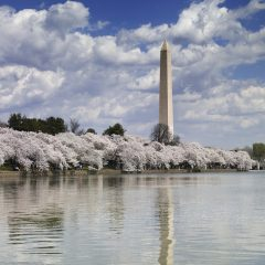 5 Must-Do Experiences for a First Time Washington DC Visitor